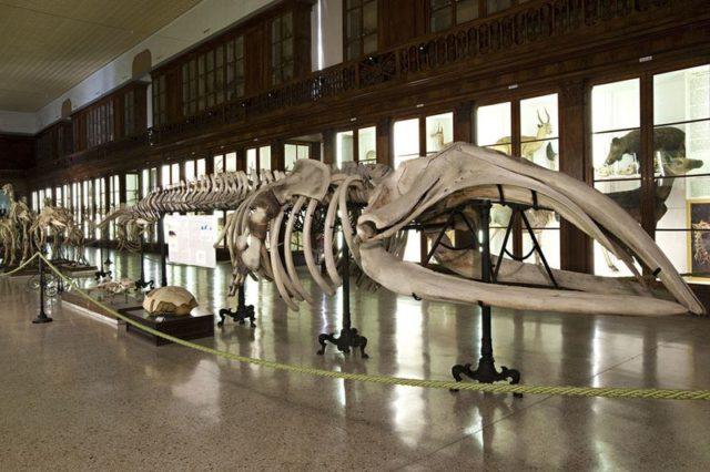 Risultato immagini per carnevale del museo 2020 napoli