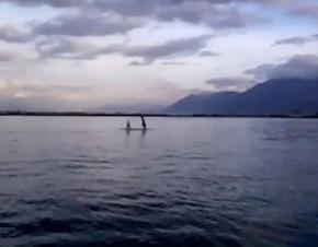 delfini torre annunziata
