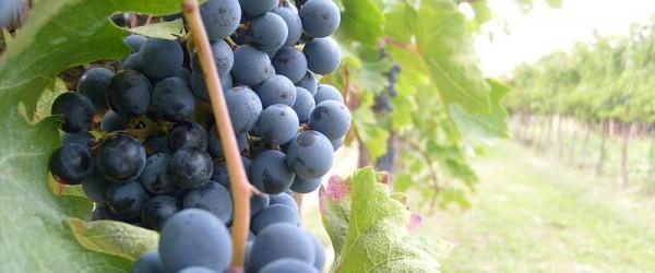 borghi del sannio in vino veritas