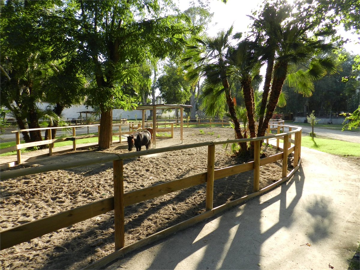 la fattoria dello zoo di napoli