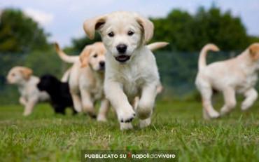 Puppies Day Care: a Napoli il primo Asilo Nido per cuccioli cani