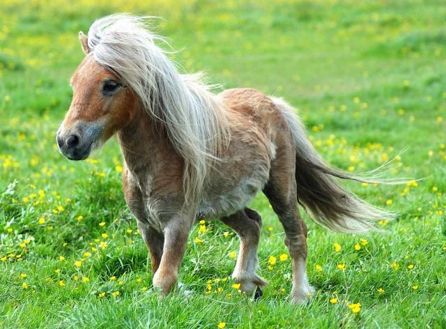 bolle di sapone e pony all'ipodromo