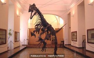 Musei Universitari di Napoli: aperti il Sabato ad 1 euro