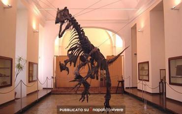 Musei Universitari della Facoltà di Scienze gratis fino al 31 maggio