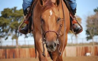 Passeggiate a cavallo nel Parco Nazionale del Vesuvio