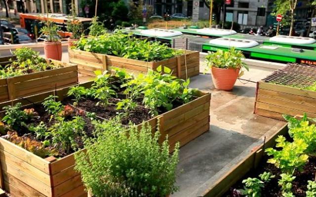 Laboratori per l 39 orto e giardino urbano all asilo - L orto in giardino ...