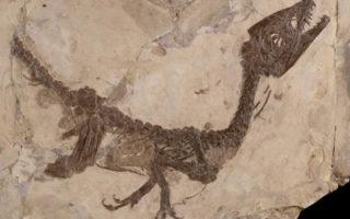Ciro, il piccolo dinosauro torna a Benevento