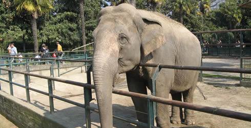 Due nuovi elefanti allo zoo di Napoli