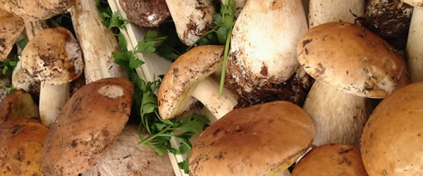 Risultati immagini per 10sagra castagna e funghi porcini napoli da vivere
