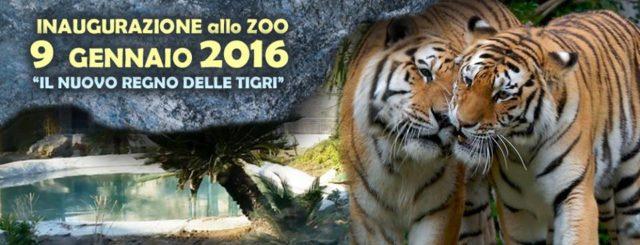 zoo di napoli tigri