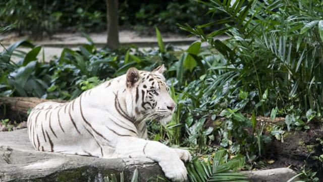 Risultati immagini per zoo di napoli