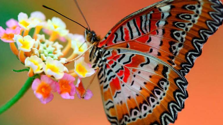 Universo delle farfalle all orto botanico di napoli - Immagini di farfalle a colori ...