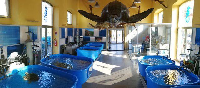 Centro Ricerche Tartarughe Marine
