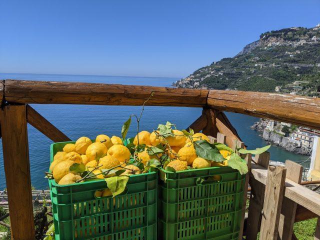 Sentiero dei Limoni - Limone Sfusato Amalfitano