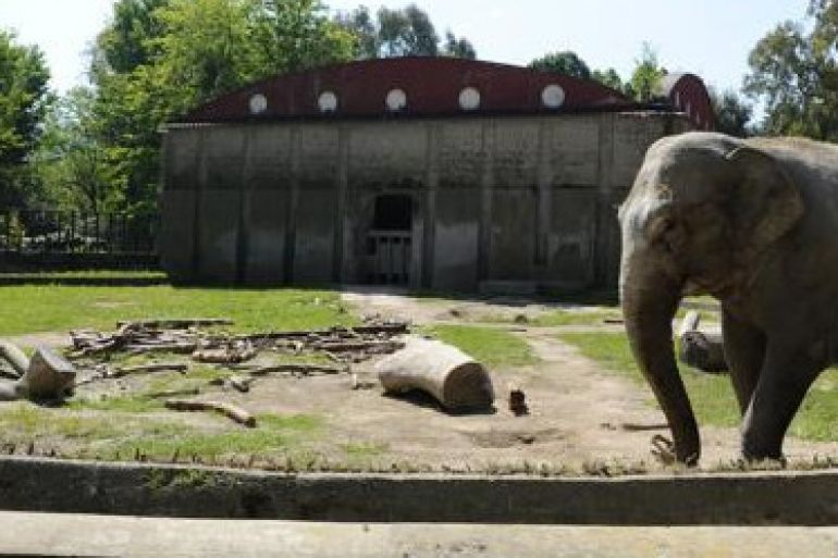 Arrivati-due-nuovi-elefanti-allo-zoo-di-Napoli-e1460633786841.jpg