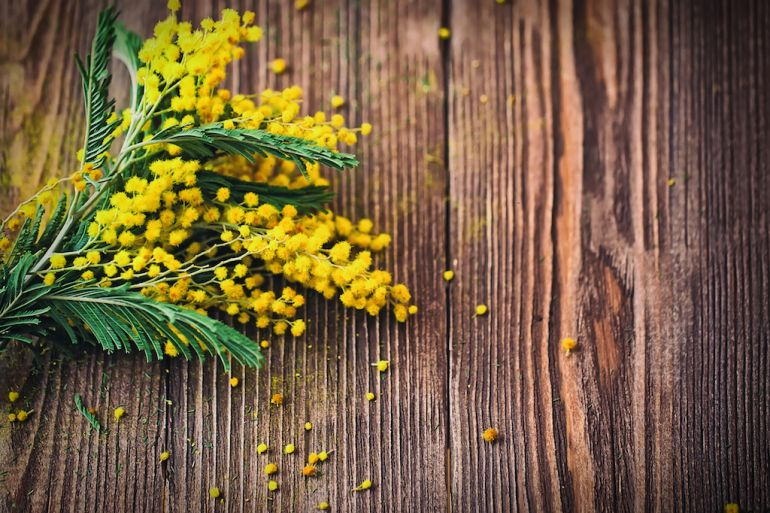 METEO 8 MARZO: Festa della Donna, sole di Primavera