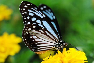 Farfalle-Viventi-in-mostra-a-San-Lorenzo-Maggiore-nel-centro-di-Napoli.jpg