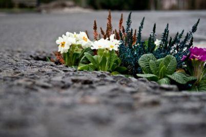 Guerrilla-Gardening-gli-studenti-riqualificano-il-centro-storico.jpg