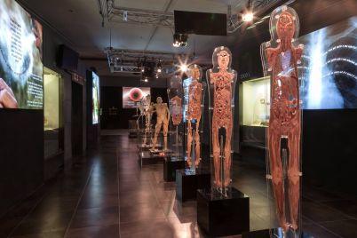 Human-Bodies-The-Exhibition-a-Città-della-Scienza-di-Napoli.jpg