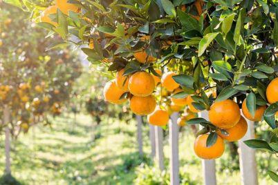 Il-Frutteto-della-Legalità-ad-Ercolano.jpg