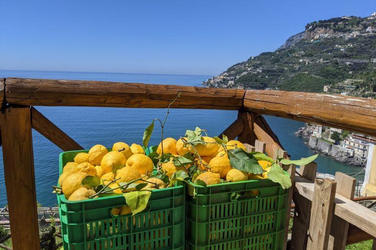 Limone-Sfusato-Amalfitano.jpg