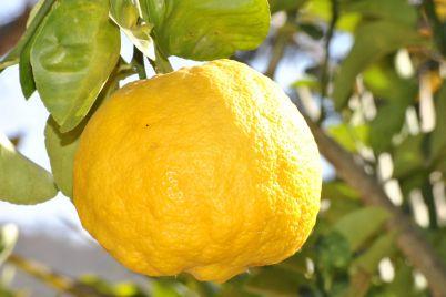 Limoni-in-festa-2018-a-Massa-Lubrense-Sagra-del-Limone-sulla-costiera-sorrentina.jpg