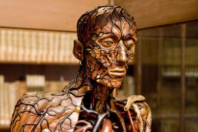 Museo-di-Anatomia-dell'Università-di-Napoli-Aperture-Straordinarie-e-Gratuite.jpg