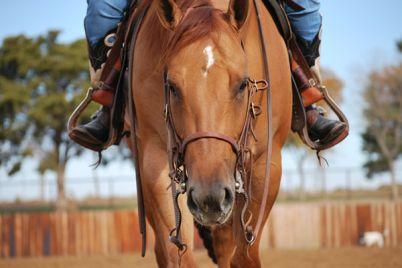 Passeggiate-a-cavallo-nel-Parco-Nazionale-del-Vesuvio.jpg