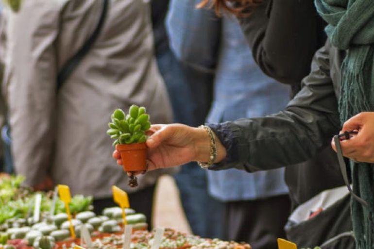 Planta-2017-allOrto-Botanico-di-Napoli-market-musica-e-laboratori-gratis.jpg
