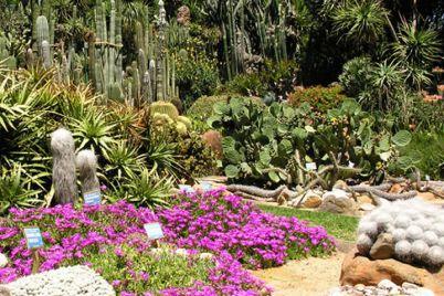 Real-Orto-Botanico-Napoli.jpg
