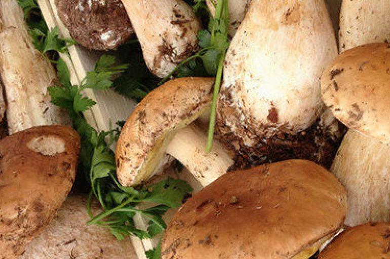 Risultati immagini per sagra dei funghi napoli da vivere