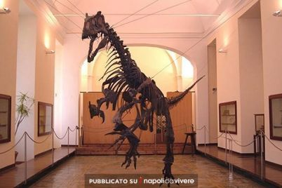 Un-Natale-al-museo-alla-scoperta-del-Museo-di-Paleontologia.jpg