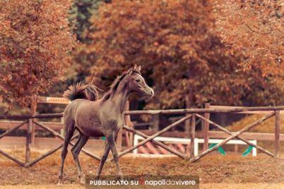 Una-passeggiata-a-Cavallo-nel-Parco-Nazionale-del-Vesuvio.jpg