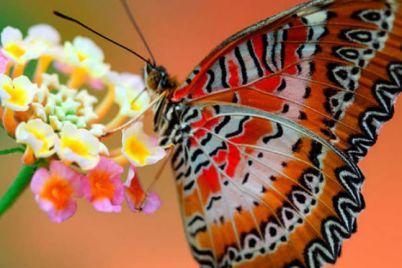 Universo-delle-Farfalle-all'Orto-Botanico-di-Napoli.jpg