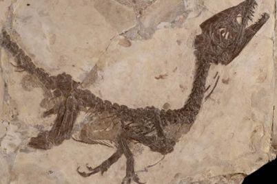 ciro-il-piccolo-dinosauro-torna-a-Benevento.jpg