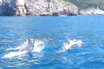 delfini-punta-campanella-napoli.jpg
