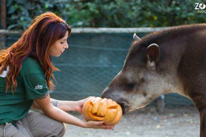 halloween-zoo-di-napoli-2018.jpg