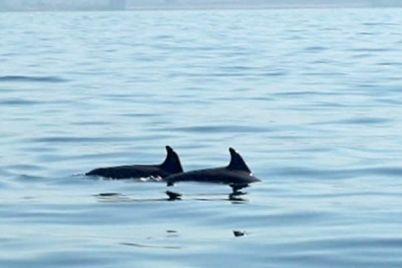 i-delfini-nel-mare-di-bagnoli.jpg