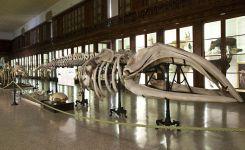 musei-universitari-di-Scienze-Naturali-e-Fisiche.jpg
