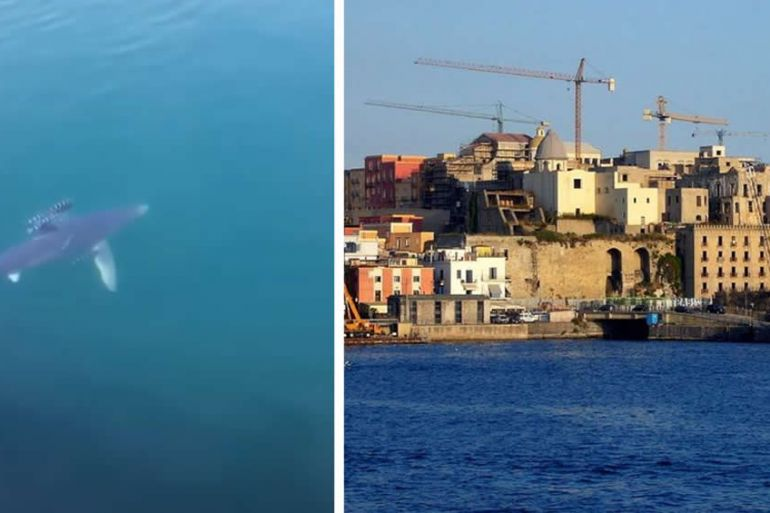 squalo-a-pozzuoli.jpg